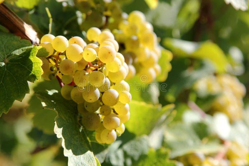 Colheita do vinho fotos de stock