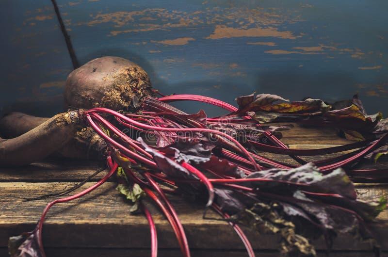 Colheita fresca das beterrabas em um fundo de madeira em tons escuros imagem de stock