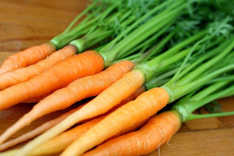 Colheita fresca de cenouras frescas suculentas novas com folhas fotografia de stock royalty free