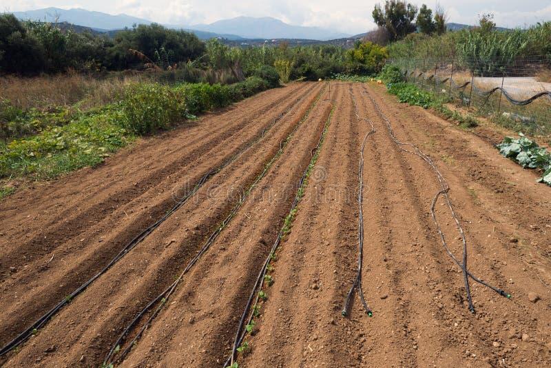 A colheita pequena da cultura da vila orgânica local esvazia arado, Grécia foto de stock royalty free