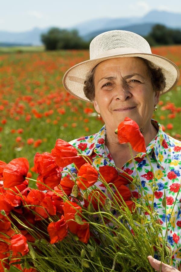 A colheita sênior da mulher floresce no campo da papoila fotos de stock royalty free