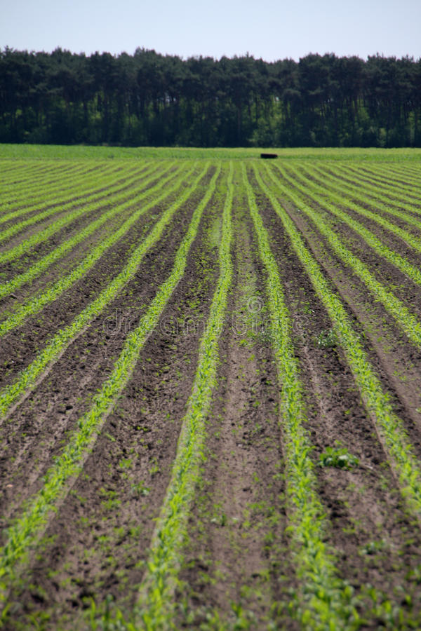 Colheitas agriculturais foto de stock royalty free