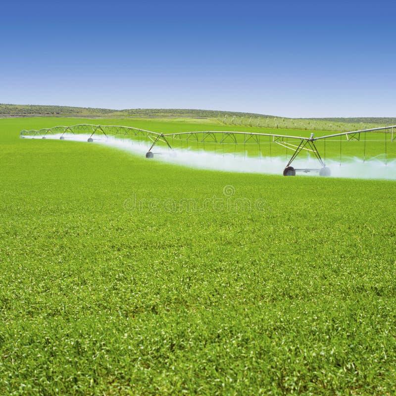 Colheitas da mola molhando do equipamento da irrigação no campo de exploração agrícola verde Indústria de cultivo da agricultura foto de stock royalty free