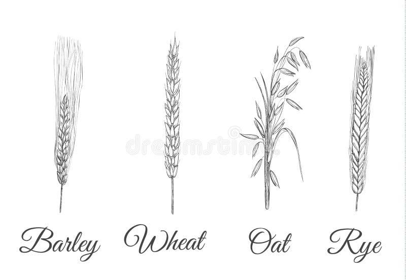 Colheitas de grão ajustadas Uma coleção do cereal ilustração royalty free