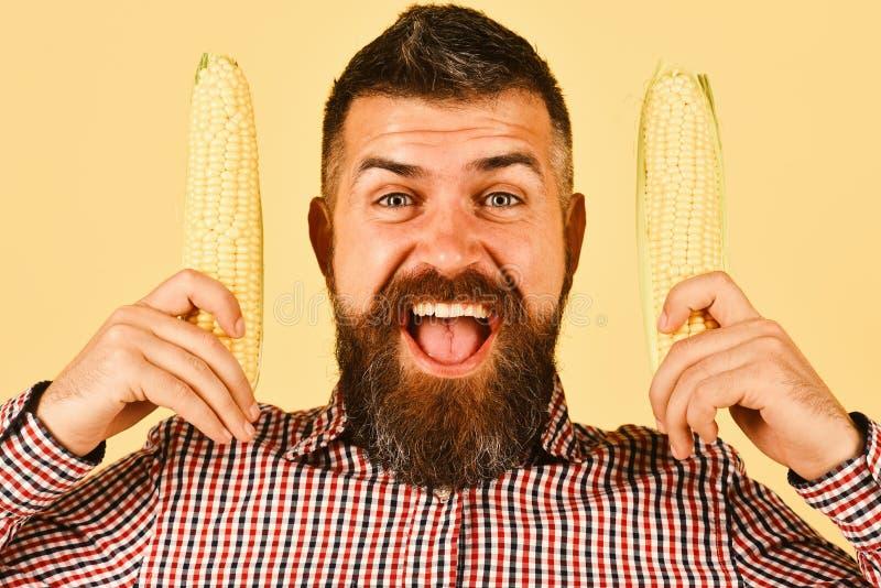 Colheitas do cultivo e do outono O homem com barba guarda espigas de milho imagens de stock royalty free