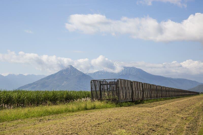 Colhendo escaninhos & Sugar Cane fotos de stock