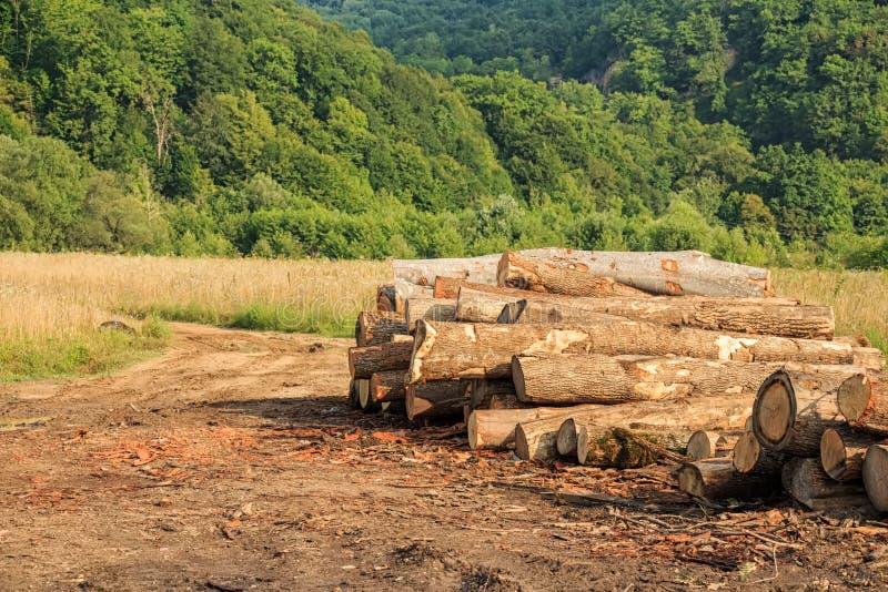 Colhendo logs da madeira serrada imagem de stock royalty free