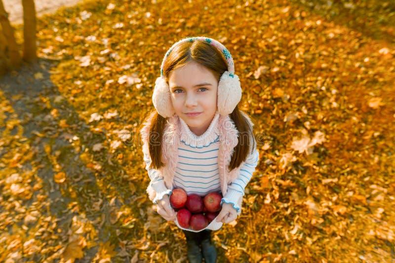 Colhendo, menina bonita pequena com as maçãs no parque do outono fotografia de stock royalty free