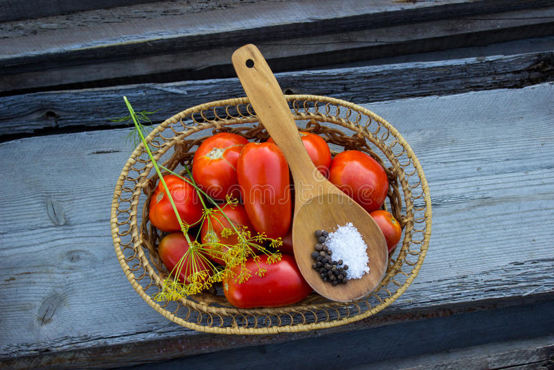 Colhendo tomates fotografia de stock