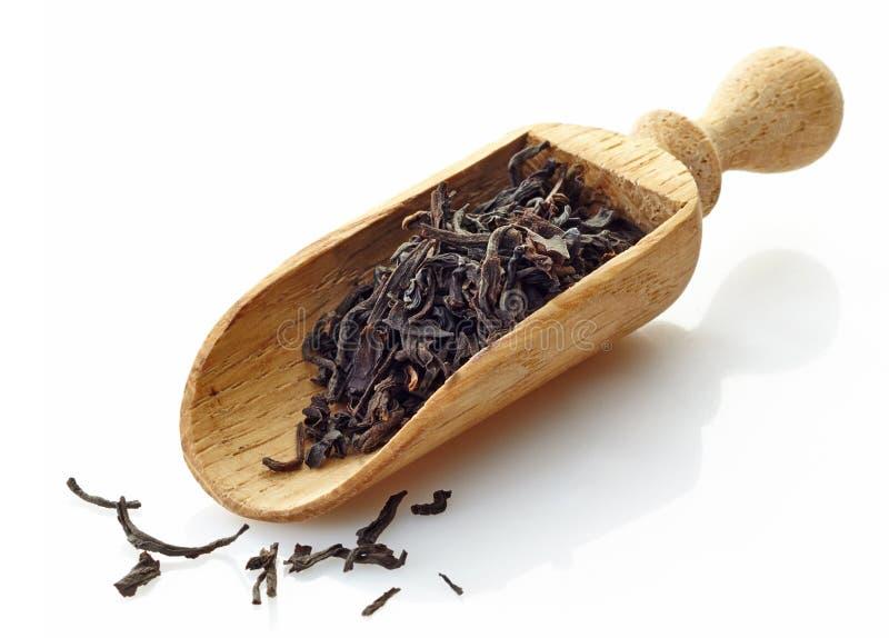 Colher de madeira com chá preto Assam imagens de stock