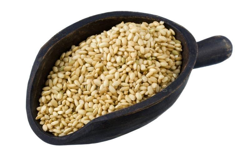 Colher do arroz integral doce fotografia de stock royalty free