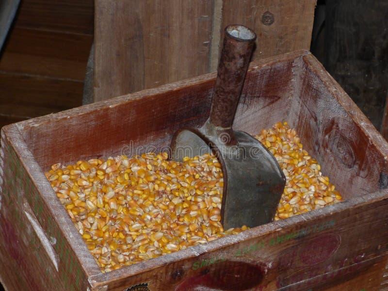 Colher do metal em núcleos de milho em um moinho de Arkansas imagem de stock royalty free