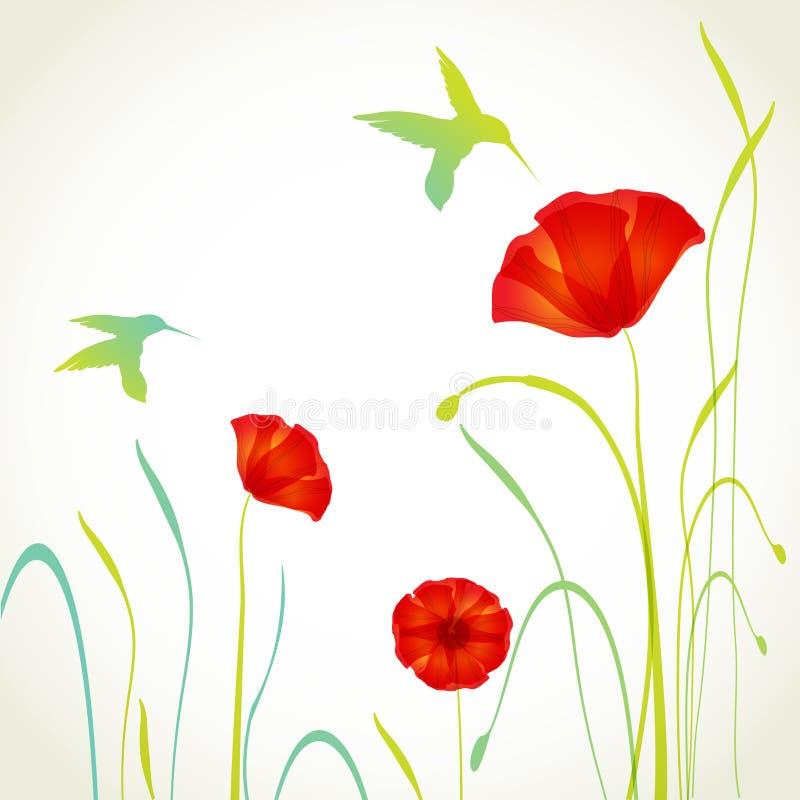 Colibrì e fiori dei papaveri royalty illustrazione gratis