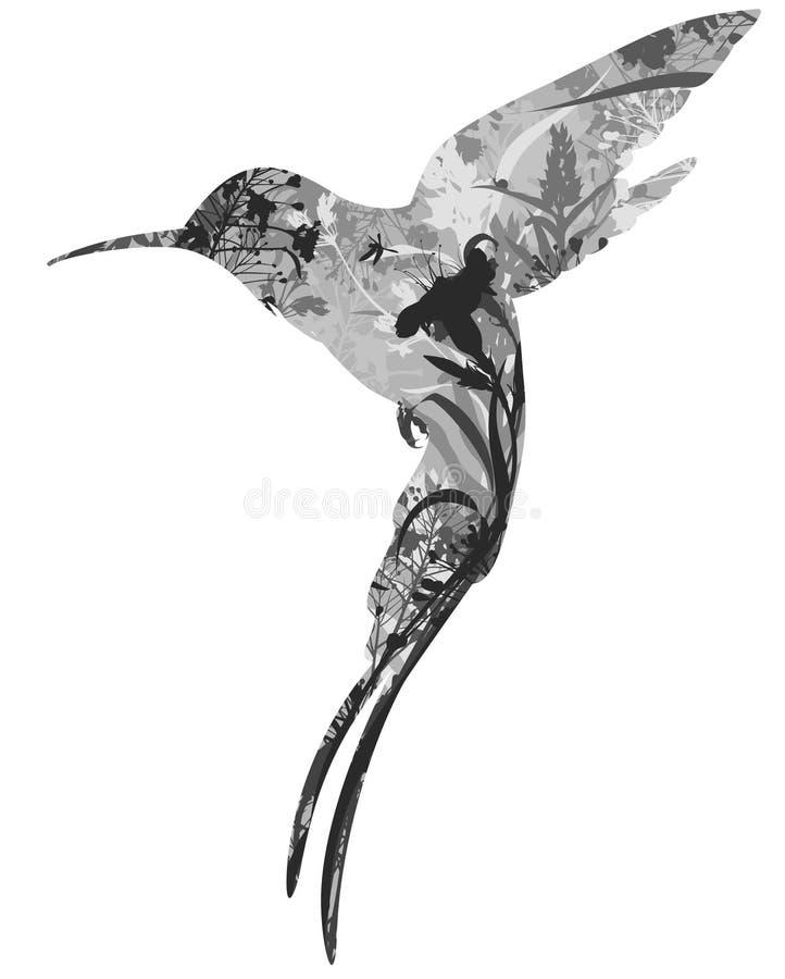 Colibri illustration de vecteur