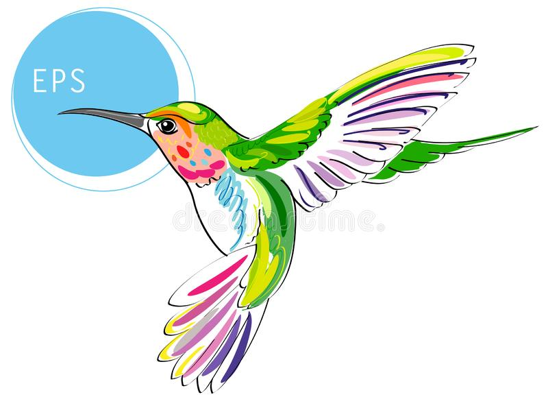 Colibri Bird. Bright vector illustration of exotic flying humming bird isolated on white background. For your design stock illustration