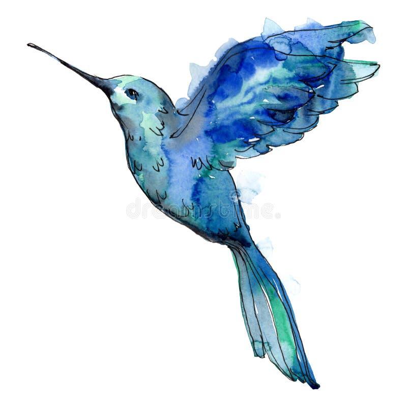 Colibri blu dell'uccello del cielo in una fauna selvatica da stile dell'acquerello isolata illustrazione vettoriale