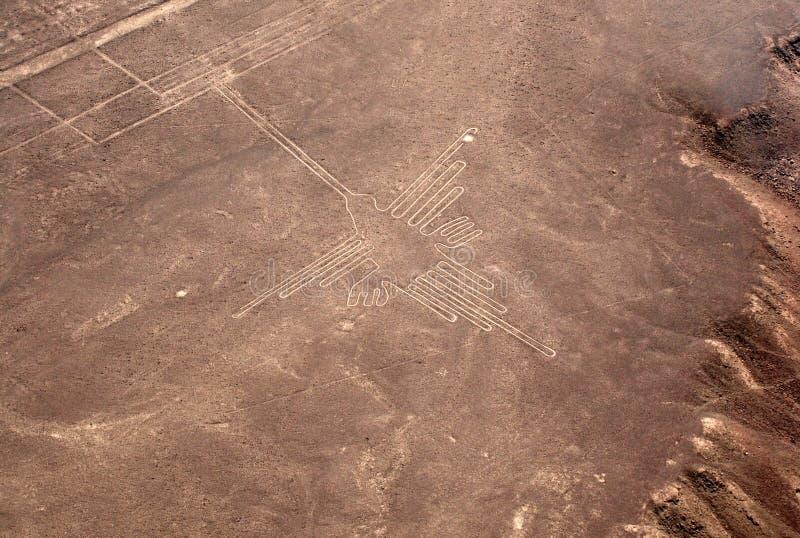 Colibri chez Nazca photos stock
