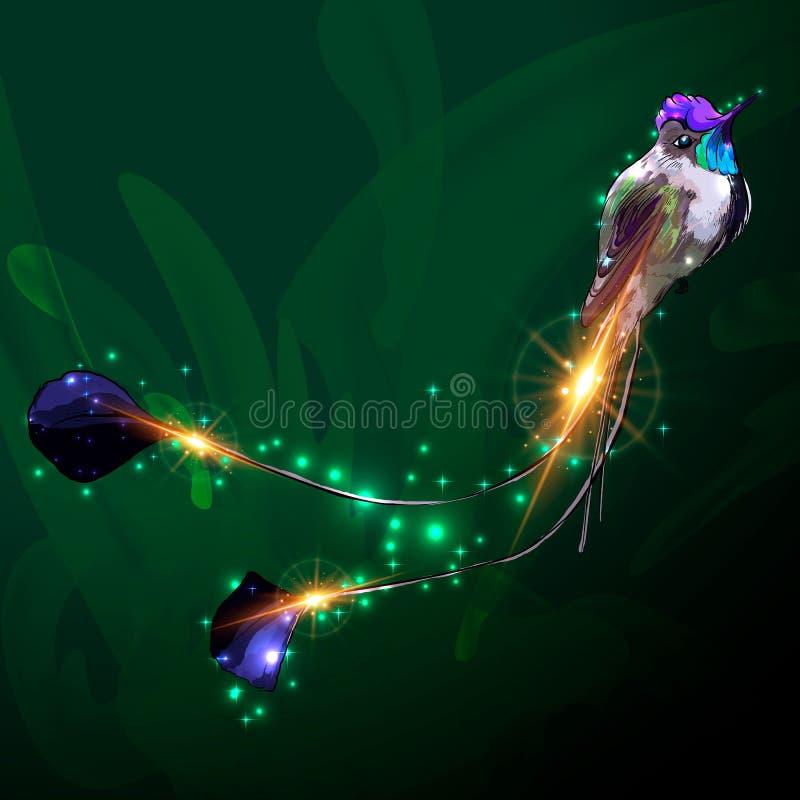 Colibri da abelha Ilustração realística do vetor de um homem do voo, o pássaro o menor do mundo s com iridescente colorido ilustração stock