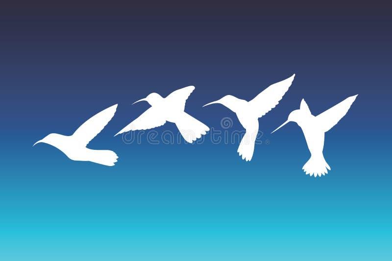 Colibri do vetor ilustração stock