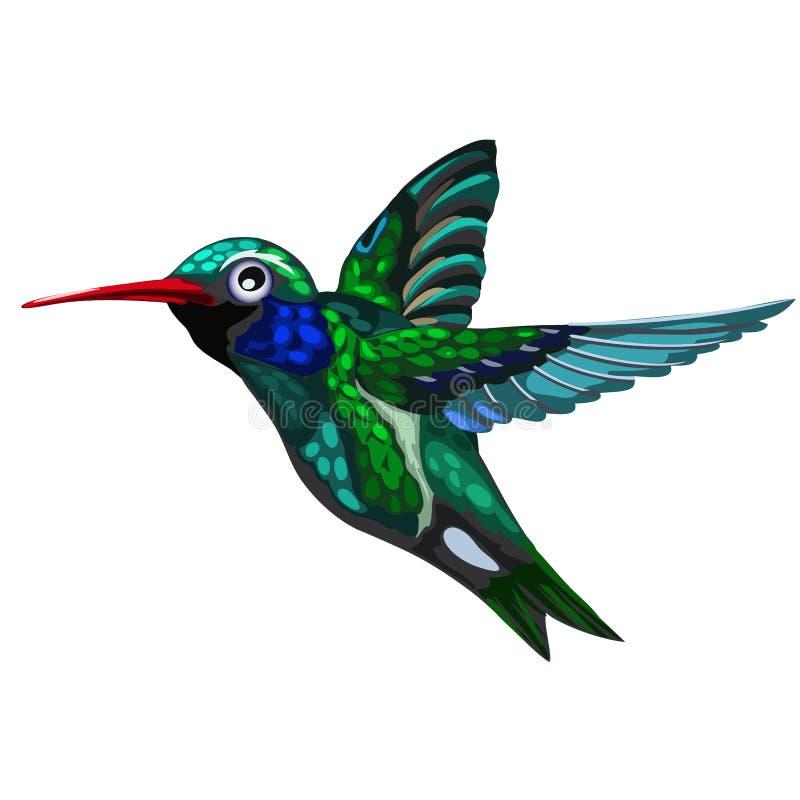 Colibri verde-azul de voo do pássaro Colibri ilustração royalty free