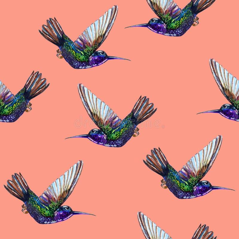 Colibris florais sem emenda do teste padrão ilustração stock