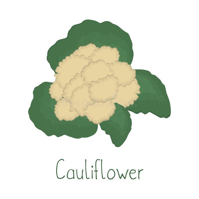 Coliflor aislada en un fondo blanco libre illustration