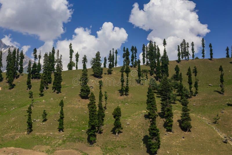 Download Colina Con Los árboles De Pino Imagen de archivo - Imagen de verde, grupo: 42427799