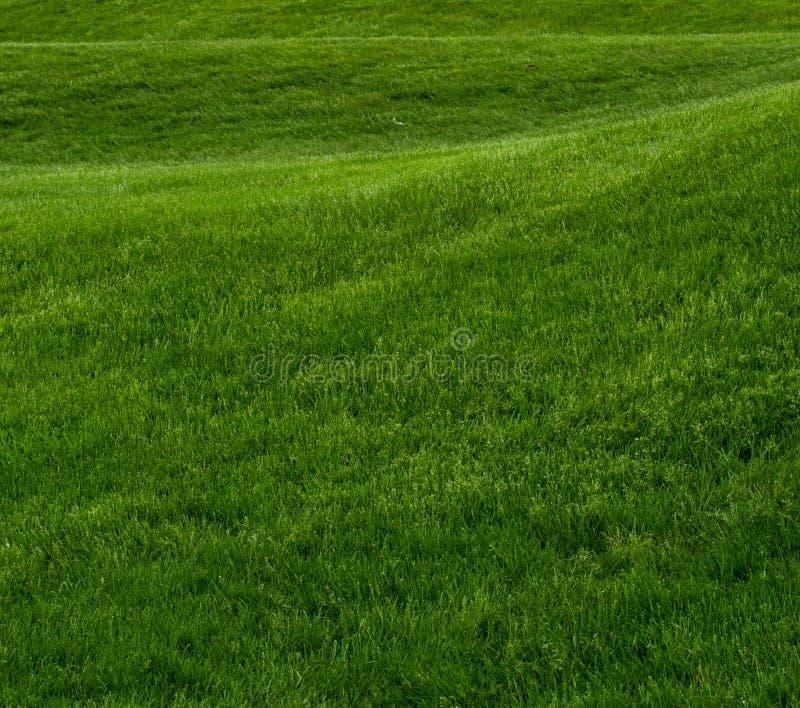 Colina del balanceo del cuadrado de la hierba verde imágenes de archivo libres de regalías