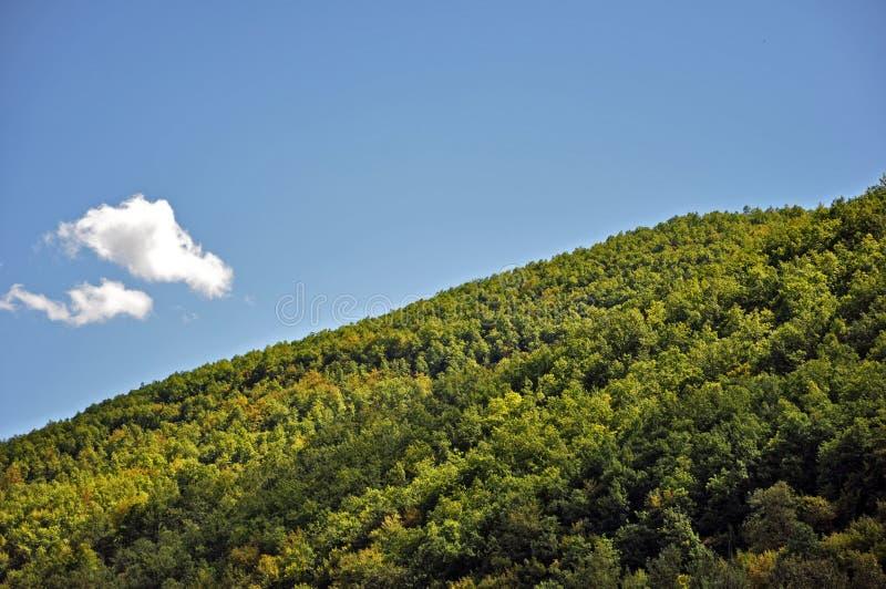 Colina del bosque con el cielo azul fotografía de archivo