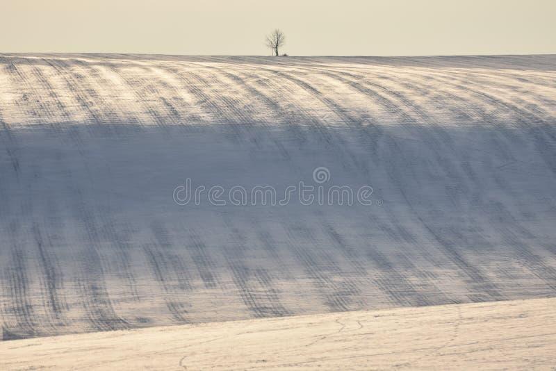 Colina Nevado con las rayas en campo y solo árbol fotografía de archivo libre de regalías