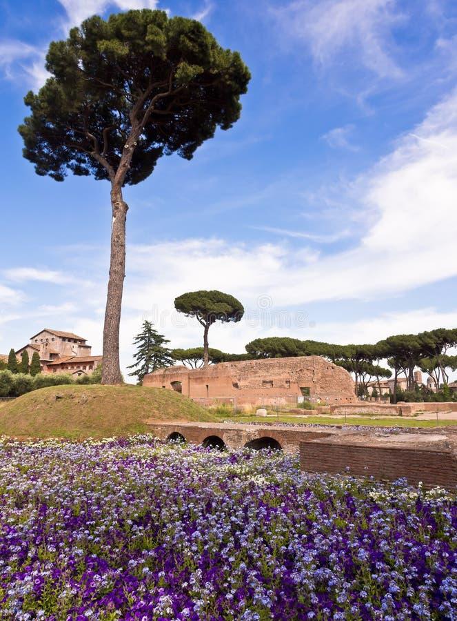 Colina Roma Italia de Palatine foto de archivo