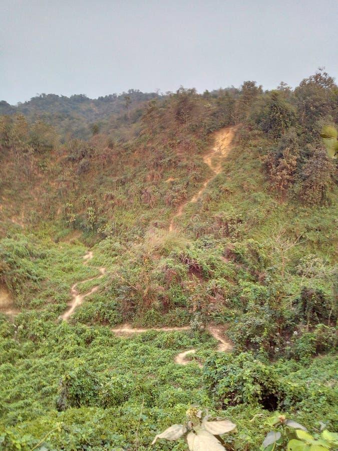 colina sundarban de la India San Martín del bosque fotos de archivo libres de regalías