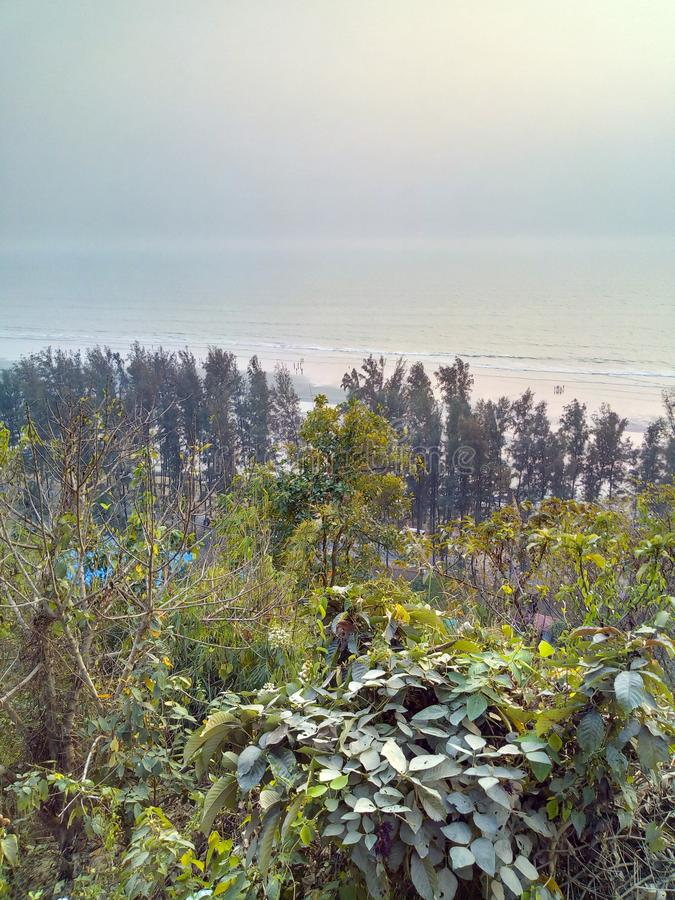 colina sundarban de la India San Martín del bosque fotografía de archivo