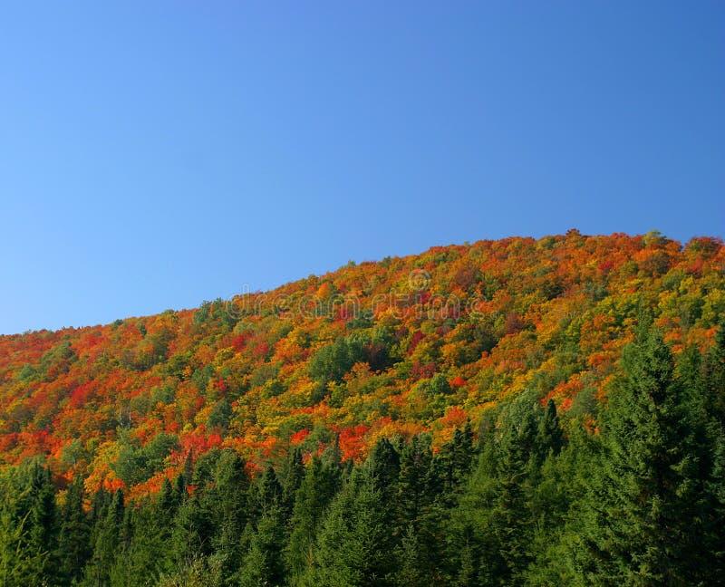 Colina y árboles del color del otoño imagenes de archivo