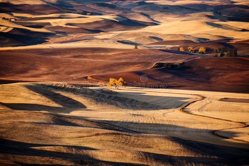 Colina y tierra de cultivo del balanceo fotografía de archivo