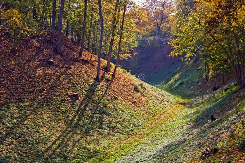 Colinas boscosas en Viljandi foto de archivo