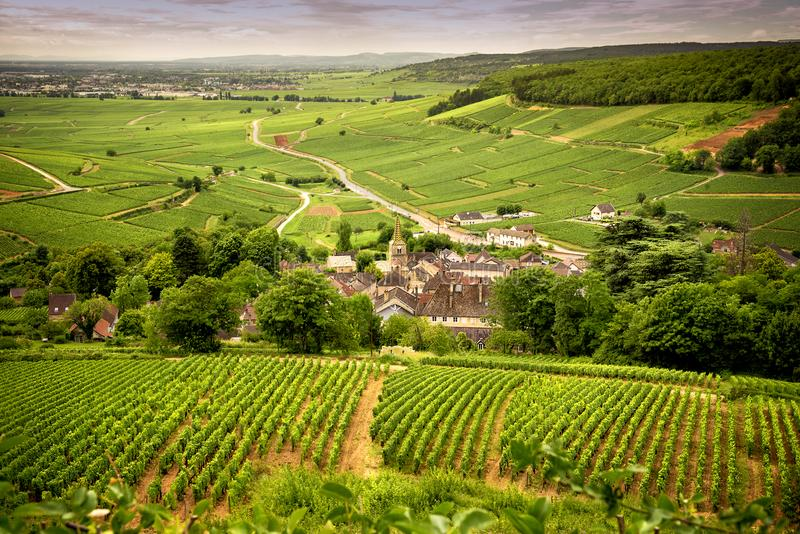 Colinas cubiertas con los viñedos en la región del vino de Borgoña, Francia fotografía de archivo libre de regalías
