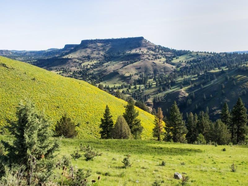 Download Colinas De La Montaña En Primavera Imagen de archivo - Imagen de montaña, flores: 42429079