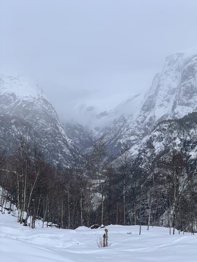Colinas de neve e floresta na Noruega imagem de stock
