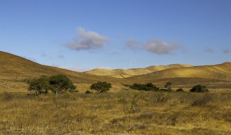 Colinas de oro con un valle de árboles verdes imagen de archivo