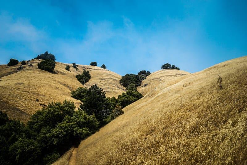 Colinas de oro hermosas con los árboles verdes en el cielo azul claro medio y asombroso foto de archivo libre de regalías