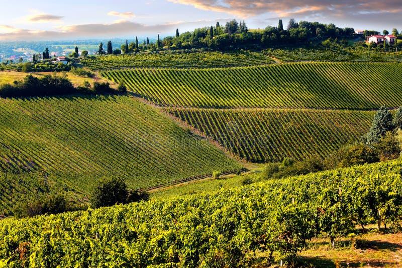 Colinas de Toscana con el viñedo imagenes de archivo
