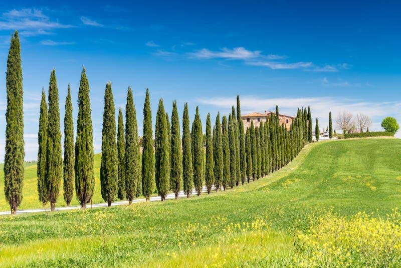 Colinas de Toscana Tiempo de primavera hermoso en Italia foto de archivo