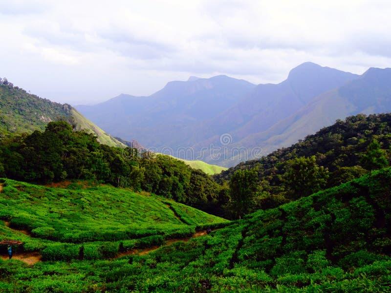 Colinas del té de Munnar imagen de archivo libre de regalías