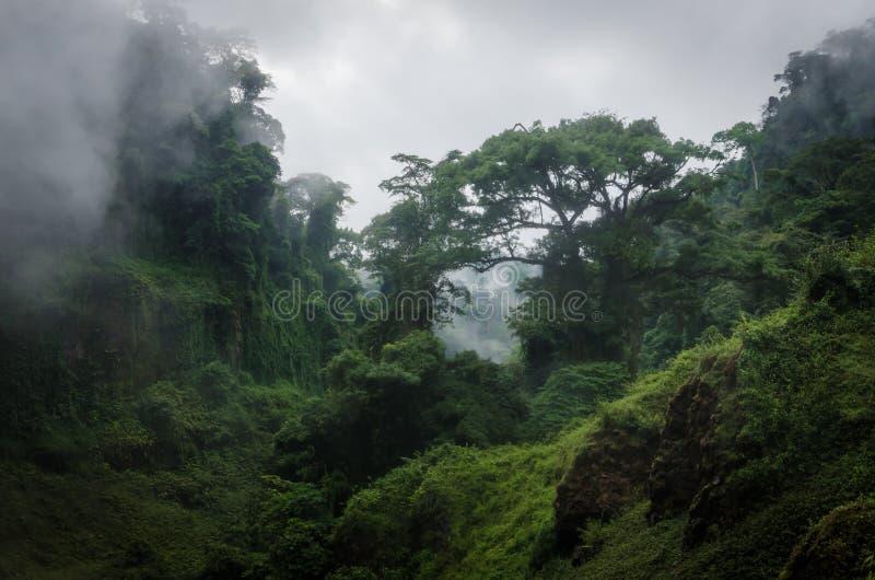 Colinas demasiado grandes para su edad de niebla en la selva tropical del Camerún, África foto de archivo