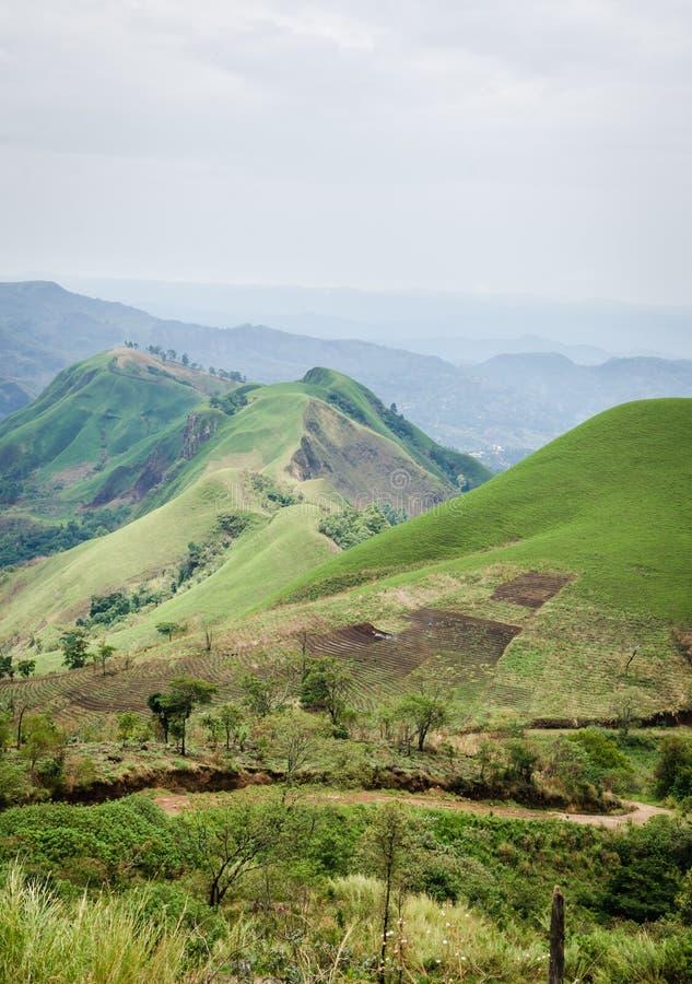 Colinas fértiles rodantes con los campos y cosechas en Ring Road del Camerún, África fotos de archivo