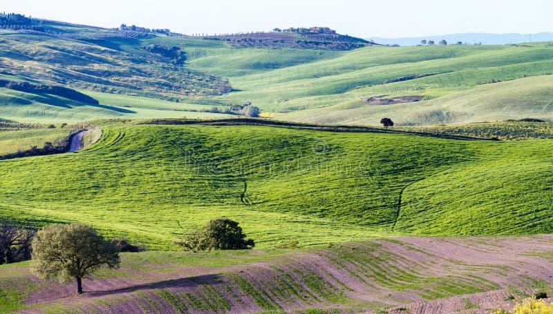 Colinas hermosas de Toscana en primavera foto de archivo