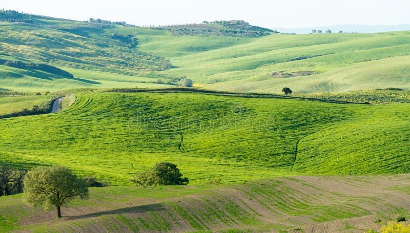 Colinas hermosas de Toscana en primavera imagenes de archivo