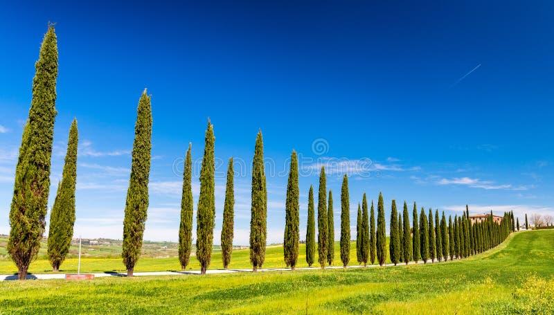 Colinas hermosas de Toscana en primavera con los cipreses imagenes de archivo