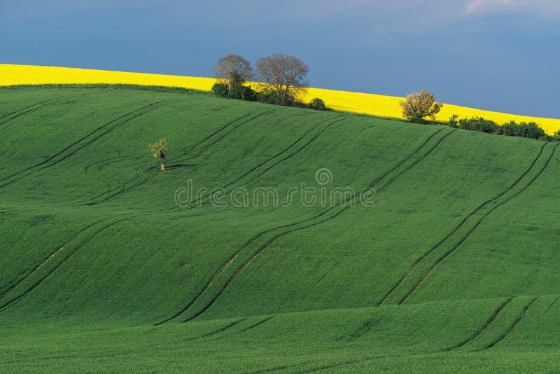 Colinas onduladas durante tiempo de primavera en Moravia del sur, República Checa fotografía de archivo